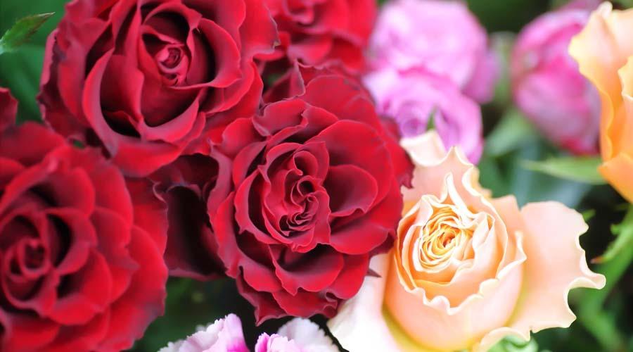 ブリリアントヴィジョン カウンセラー白洲響子の ~素顔のマリー・アントワネットに学ぶ美意識 & プチ・トリアノンスタイルで愉しむ花と音楽のランチョンパーティ~